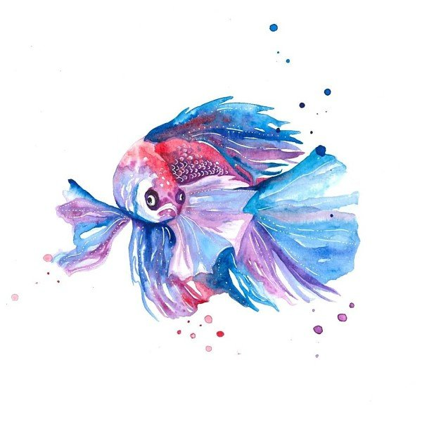 Betta Fish Painting
